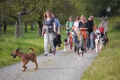 Hundeschulausflug Sicher auf 4 Pfoten, Grüner See, 28.9.14, Foto Nr.9