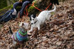 Gimbi,Staufen,Kaisertempel,T-Dogs,2.2.2014, Foto Nr.7