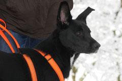Nele Neuhaus Krimi Tour, T-Dogs, 1.2.2015 Foto Nr.6