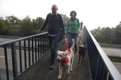 Kapersburg+Winterstein, T-Dogs, 5.10.2014, Foto Nr. 1