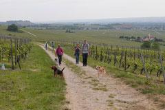 Klosterrunde, T-Dogs,16.5.2015 Foto Nr.8
