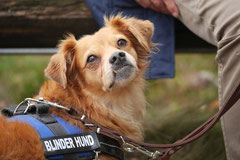 Gimbi,Staufen,Kaisertempel, T-Dogs, 12.10.2014, Foto Nr.14