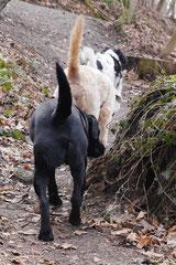 Lindenfels, T-Dogs, 7.3.2015 Foto Nr.14