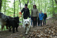 Rheinsteig Light, T-Dogs, Mai 2014, Foto Nr.3