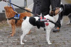 Lindenfels, T-Dogs, 7.3.2015 Foto Nr.6