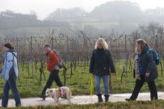 Bensheimer Weinlagen, T-Dogs, 25.1.14, Foto Nr.16