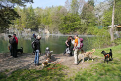 Rund um Lindenfels, T-Dogs,12.4.2014, Foto Nr.12