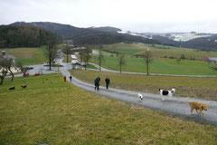 Irrbachquelle,T-Dogs,26.1.14, Foto Nr.1