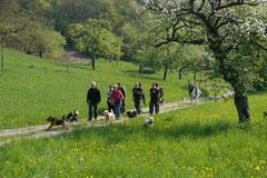 Bensheimer Weinlagen, T-Dogs, 5.5.13, Foto Nr.1