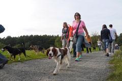 Hundeschulausflug Sicher auf 4 Pfoten, Grüner See, 28.9.14, Foto Nr.6