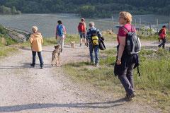 Assmannshäuser Höllenberg, T-Dogs, 17.5.2015 Foto Nr.20
