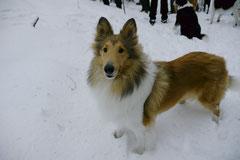 Altkönig,T-Dogs,01.2.2014, Foto Nr.22