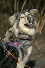 Rod an der Weil, T-Dogs,12.1.14, Foto Nr.26