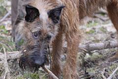 Drachenwege, T-Dogs, 8.3.2015 Foto Nr.5