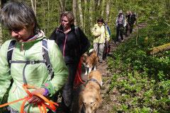 Mantrailing+Wandern Rhön,T-Dogs,30.4.-3.5.2015 Foto Nr.13