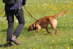 Mantrailing+Wandern Rhön,T-Dogs,30.4.-3.5.2015 Foto Nr.30