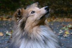 Welttierschutztag 4.10.13 Foto Nr.9