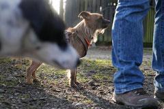 Schmitten zur Landsteiner Mühle,T-Dogs, 11.1.2014,Foto Nr.9
