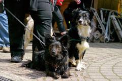 Bensheimer Weinlagen, T-Dogs, 5.5.13, Foto Nr.15