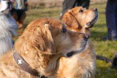 Rod an der Weil, T-Dogs,12.1.14, Foto Nr.20