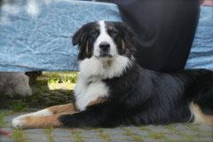 Grünwiesenweiher Welttierschutztag, T-Dogs, 4.10.2014 Foto Nr.21