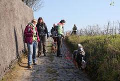 Bensheimer Weinlagen,T-Dogs,22.11.2014, Foto Nr.14
