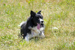 Lindenfels mit Picnic,T-Dogs,15.6.2014,Foto Nr.23