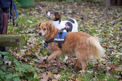 Rhön,Wellness+Wandern,T-Dogs,7.-9.11.2014, Foto Nr.7