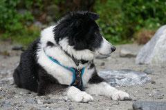 Schweiz-Tessin,T-Dogs,Mai 2014 Foto Nr.13