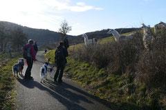 Schmitten zur Landsteiner Mühle,T-Dogs, 11.1.2014,Foto Nr.17