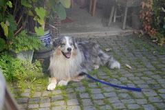 Grünwiesenweiher Welttierschutztag, T-Dogs, 4.10.2014 Foto Nr.17