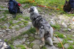 Schweiz-Tessin,T-Dogs,Mai 2014 Foto Nr.36