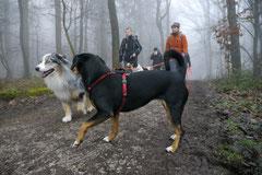 Gimbi,Staufen,Kaisertempel,T-Dogs,2.2.2014, Foto Nr.5