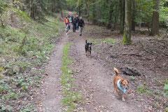 Kapersburg+Winterstein, T-Dogs, 5.10.2014, Foto Nr. 17