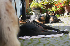 Grünwiesenweiher Welttierschutztag, T-Dogs, 4.10.2014 Foto Nr.24