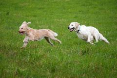 Lindenfels mit Picnic,T-Dogs,15.6.2014,Foto Nr.20