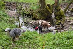 Mantrailing+Wandern Rhön,T-Dogs,30.4.-3.5.2015 Foto Nr.7