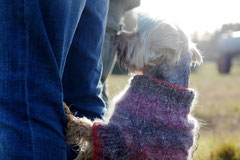 Rod an der Weil, T-Dogs,12.1.14, Foto Nr.24