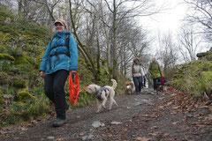 Rhön,Wellness+Wandern,T-Dogs,7.-9.11.2014, Foto Nr.18