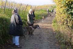 Bensheimer Weinlagen,T-Dogs,22.11.2014, Foto Nr.8