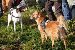 Weiltal, T-Dogs, 7.12.2014, Foto Nr.12
