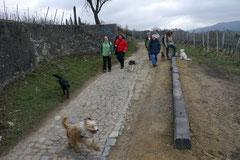 Bensheimer Weinlagen, März 2013 Foto Nr.10