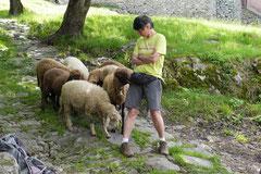 Schweiz-Tessin,T-Dogs,Mai 2014 Foto Nr.35
