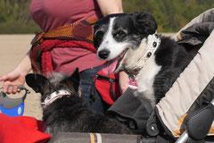 Grünwiesenweiher Welttierschutztag, T-Dogs, 4.10.2014 Foto Nr.8