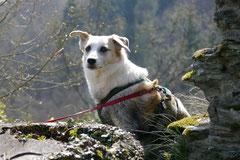 Rheingauen Gebück,T-Dogs,29.+30.3.14, Foto Nr.11