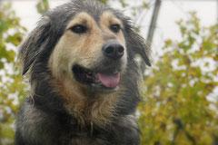 Bensheimer Weinlagen,T-Dogs,20.10.13, Foto Nr.20