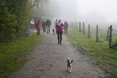 Gimbi,Staufen,Kaisertempel, T-Dogs, 12.10.2014, Foto Nr.1