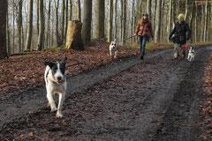 Schnuppertour Zacken,T-Dogs,17.1.2015, Foto Nr.8