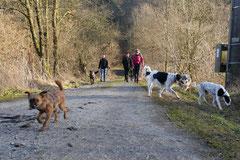 Schmitten zur Landsteiner Mühle,T-Dogs, 11.1.2014,Foto Nr.15
