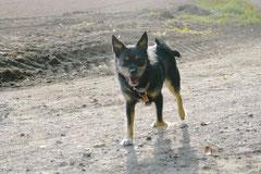 Hundeschulausflug-Sicher auf 4 Pfoten-28.9.13 Foto Nr.18